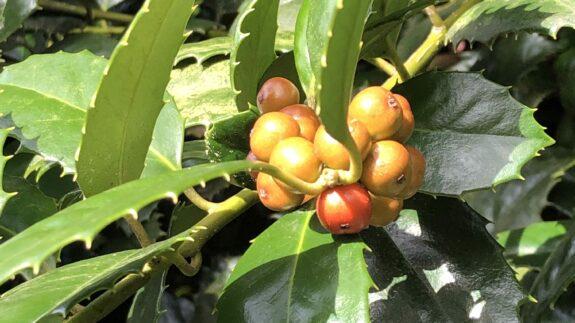 Home 1 30189FBA 1FE2 43DA 88ED F530F44261D0 rotated custom crop